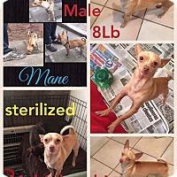 Adopt A Pet :: Mone - LAKEWOOD, CA