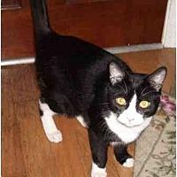 Adopt A Pet :: Clooney - Madisonville, LA