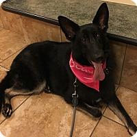 Adopt A Pet :: Chloe - Pennington, NJ