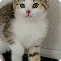 Adopt A Pet :: Myles - Greenwood, SC