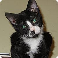 Adopt A Pet :: Teddy - Richfield, OH