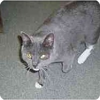Adopt A Pet :: Plymouth - Hamburg, NY