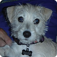 Adopt A Pet :: Nelly - Omaha, NE