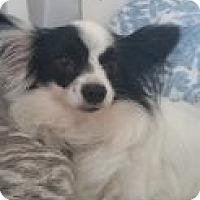 Adopt A Pet :: Carolina - Fort Lauderdale, FL