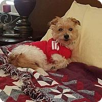 Adopt A Pet :: Raisin - Fayette City, PA