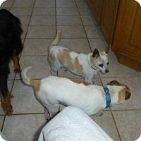 Adopt A Pet :: Jane - Wyanet, IL