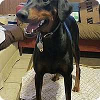 Adopt A Pet :: Lucy--adopted! - New Richmond, OH