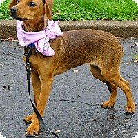 Adopt A Pet :: Lexie needs foster NOW - Sacramento, CA