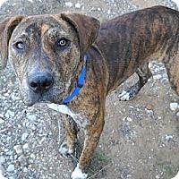 Adopt A Pet :: Bundle - Flatonia, TX