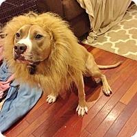 Adopt A Pet :: Omar - Reisterstown, MD