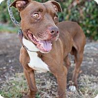Adopt A Pet :: Ziti - San Diego, CA