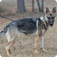 Adopt A Pet :: Jessie - Dacula, GA
