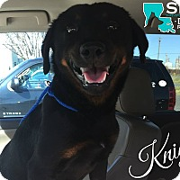 Adopt A Pet :: Knight - Benton, LA