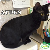 Adopt A Pet :: Hayden - Carencro, LA