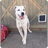 Adopt A Pet :: Evan - DeForest, WI