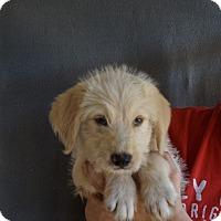 Adopt A Pet :: Zach - Oviedo, FL