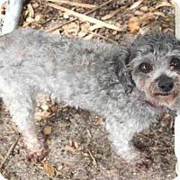 Adopt A Pet :: BARDON - Wainscott, NY