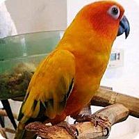Adopt A Pet :: Tangi - Lenexa, KS
