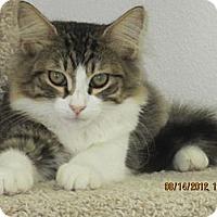 Adopt A Pet :: Simon - Bunnell, FL