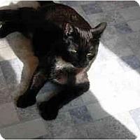 Adopt A Pet :: Eliot - North Boston, NY