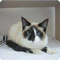 Adopt A Pet :: Ithica - Warren, MI