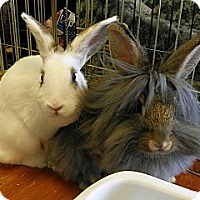 Adopt A Pet :: Pitty & Bonnie - North Gower, ON