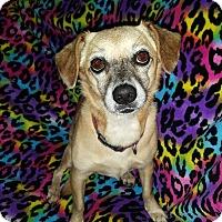 Adopt A Pet :: Penny Lou - Homewood, AL