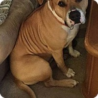 Adopt A Pet :: Rocky - Bardonia, NY