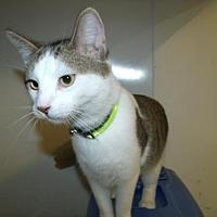 Adopt A Pet :: Maleck - Napoleon, OH