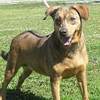 Adopt A Pet :: Beebe - Greenville, RI