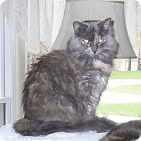 Adopt A Pet :: Annabelle - Kalamazoo, MI