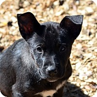 Adopt A Pet :: Mercury - Garland, TX