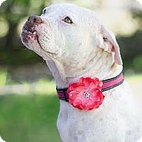 Adopt A Pet :: Sweet PEACHES - Phoenix, AZ