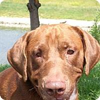 Adopt A Pet :: Rodney - Lewisville, IN