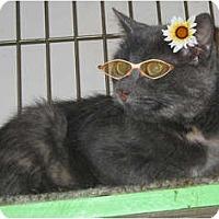 Adopt A Pet :: Norell - Catasauqua, PA