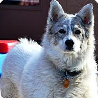Adopt A Pet :: Toby - Gilbert, AZ