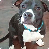 Adopt A Pet :: Darla - Marietta, GA