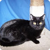Adopt A Pet :: Purissa - Colorado Springs, CO