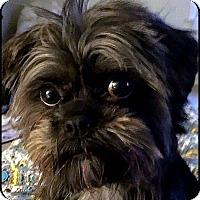 Adopt A Pet :: VIRGINIA in Linden, VA. - Seymour, MO