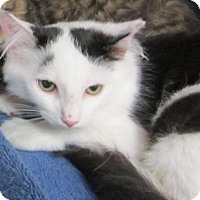 Adopt A Pet :: Misty - East Brunswick, NJ