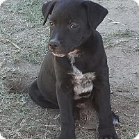 Adopt A Pet :: LoneStar - Orange Lake, FL