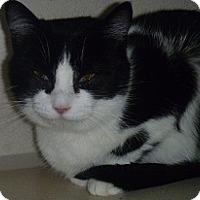 Adopt A Pet :: Lexa - Hamburg, NY
