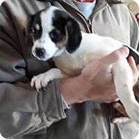 Adopt A Pet :: Buttons - Wytheville, VA