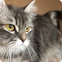 Adopt A Pet :: Precious - Spring, TX