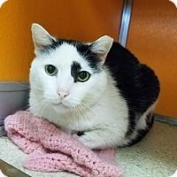 Adopt A Pet :: Mickey - Elyria, OH