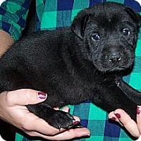 Adopt A Pet :: Mandy - Denver, IN
