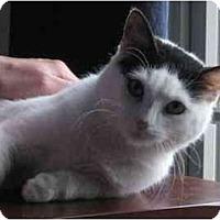 Adopt A Pet :: Nica - Richmond, VA