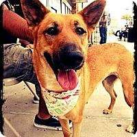Adopt A Pet :: Noel - Beaumont, TX