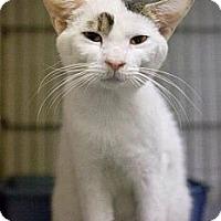 Adopt A Pet :: Jeb - Chesapeake, VA