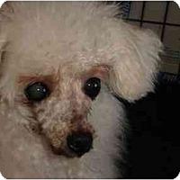 Adopt A Pet :: Marcel - Berlin, WI
